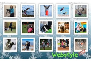 "Tournament on Dog Frisbee freestyle ""Follow the webstyle 2018"""
