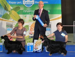 Cocker Spaniel Show in Moscow